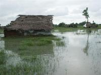 Floodwaters devastate Kilinochchi-District