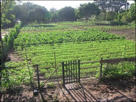 Tamilnet pilot irrigation project explores water for Garden design 1 2 acre