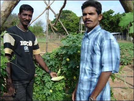 Shankar (28) from Santhapuram in Kilinochchi who tends to the plants at the pilot field and Mathan, Agricultural specialist, who supervises the pilot study.