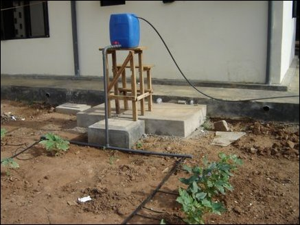 Micro irrigation setup ideal for a home garden, For a typical 10mx10m plot water can be fed from a 50 ltr can held at a height of one meter and water fed to plants through micro tubes.