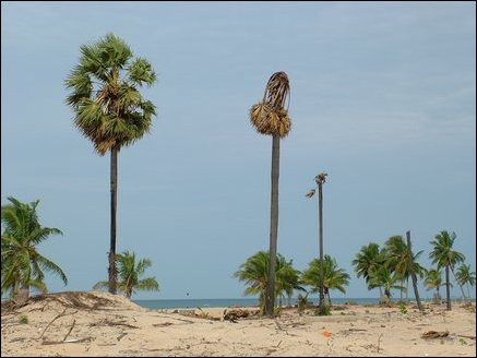 Mullaitivu coast brings memories of the devastation caused by the tidal waves