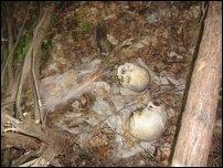 Skeletons found in Kokkuvil