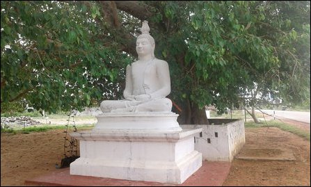 Buddh statue, Bo tree at Kokkulaay