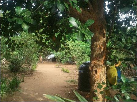 Kuruvil, trees