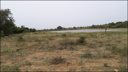 SL Forest Department seizes lands, pond in Unnichchai
